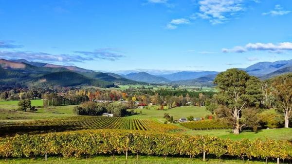 Autumn over the Ringer Reef Vineyard